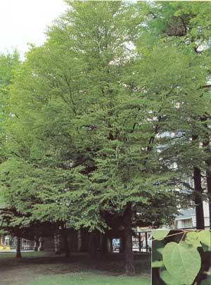 zukan017